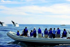 loscaboswhales