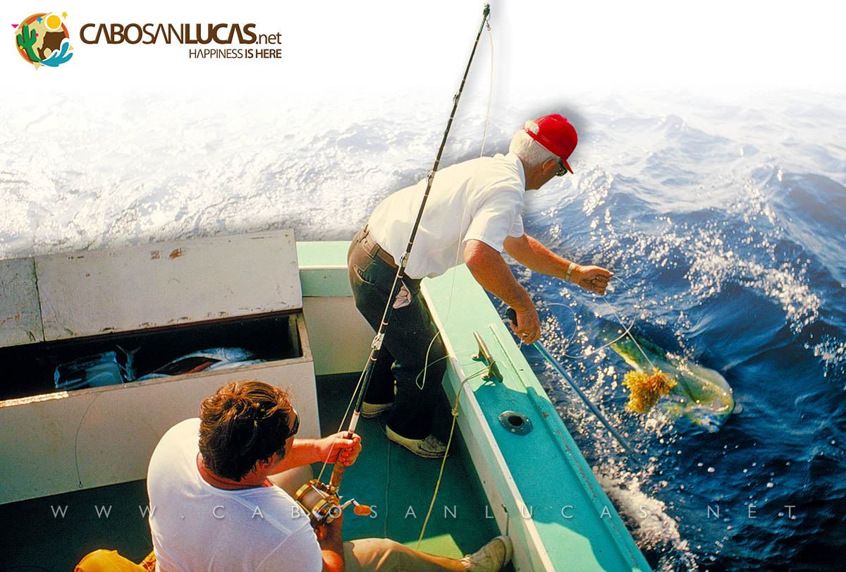 Sportfishing in Cabo